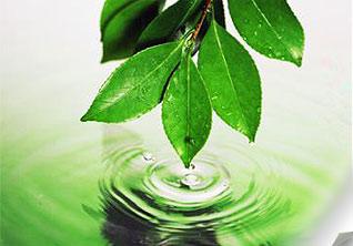 Реферат на тему Международные конференции договоры и организации  Международные конференции договоры и организации по охране окружающей природной среды реферат по экологии